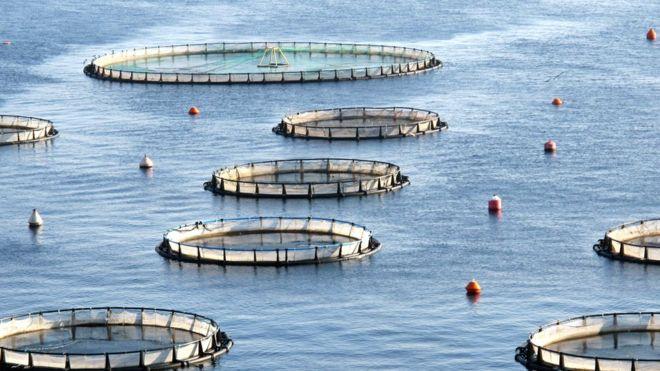 aquaculture BBC Arvia